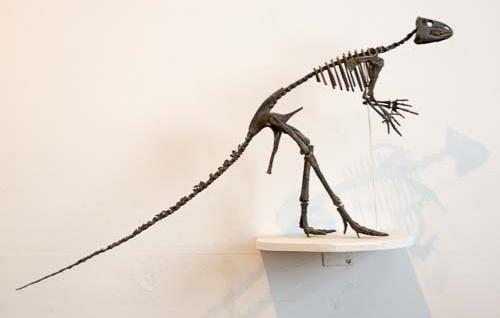 Foto eines Saurierskellets aus der Sammlung des paläontologischen Instituts Tübingen
